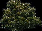 Árvore Composta