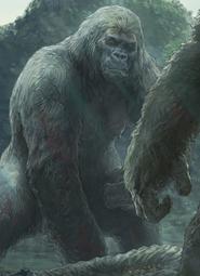 Mãe do Kong