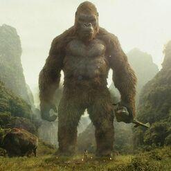 Kong (MonsterVerse)