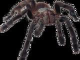 Aranha Composta