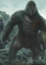 Pai do Kong