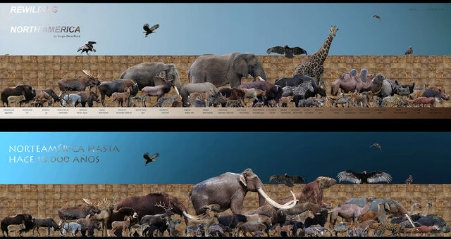 File:Deuda pleistocene debt by serchio25.jpg