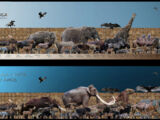 Pleistocene rewilding in North America (Life After People)