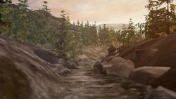 Floresta Queimada - 3