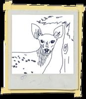FotosLIS-Cervo1