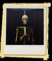FotosLIS-EsqueletoNo2