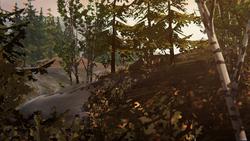 Floresta Queimada - 2