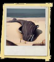 TX E4 4A Beach Whales Unlocked