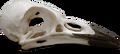 Sean's Souvenirs E3 - Bird Skull