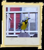 TX E3 5B LivingRoom Bird Unlocked