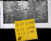 Locais-floresta