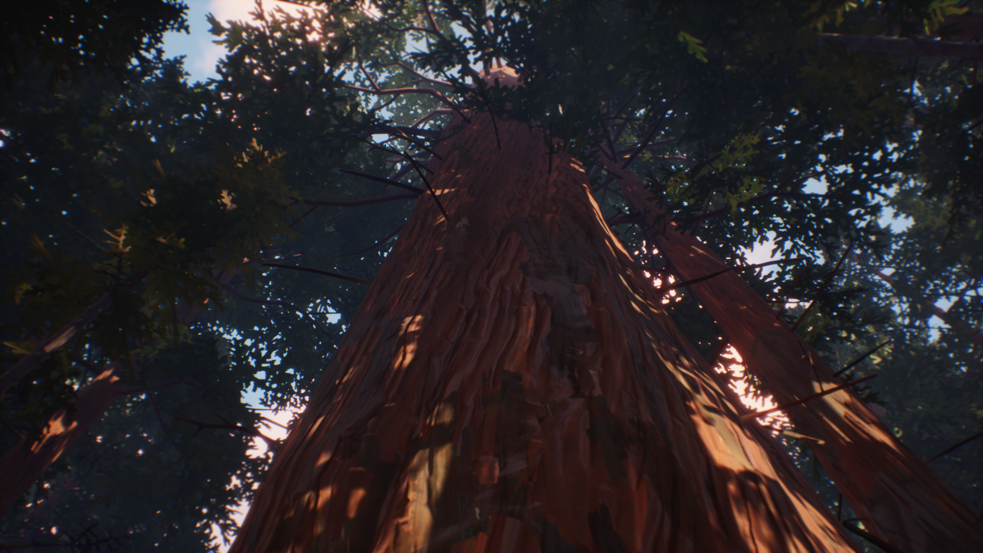 Humboldt County - Redwood Tree - Morning