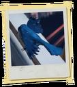 TX MinorChoice Bird