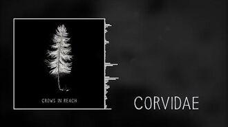 Corvidae (official audio)
