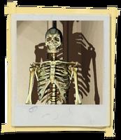 FotosLIS-Esqueleto2