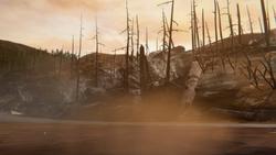 Floresta Queimada - 17