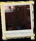 Minorchoice-e2-plant