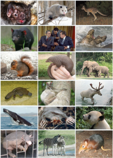 426px-Mammal Diversity 2011