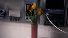 Kwiaty od Taylor