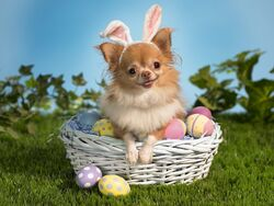 Bunny wishes you a happy easter-normal