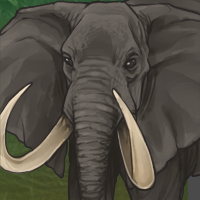 Npcbullelephant