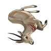 Carcass rhimgazelle