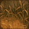 Grassy Den
