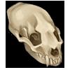 Skull otter