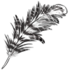 Feather sacredibis