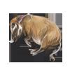 Carcass redriverhog