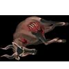 Carcass hartebeest