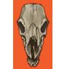 Skull impala