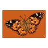 Butterflipaintedlady