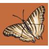 Africanmapbutterfly