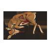 Carcass steenbok