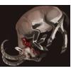 Carcass waliaibex