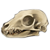 Skull meerkat