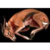 Carcass gazelle