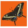 Emperorswallowtail