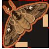 Deertusharrowsphinx