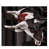 Carcass cow