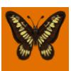 Deertushcopperyswordtail
