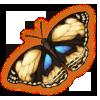 Pansybuttfly