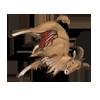 Carcass barbarysheep