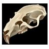 Skull rat