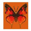 Scarletbutterfly
