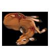Carcass impala