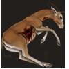 Carcass redfrontedgazelle
