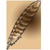Feather nightjar