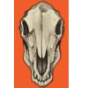 Skull zebra